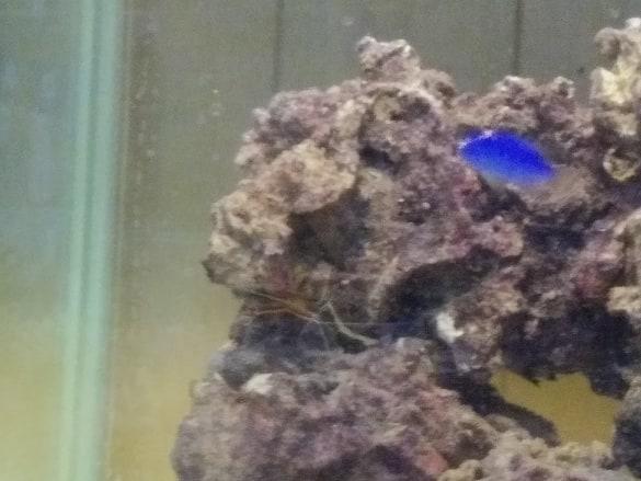 shrimp and blue.jpg