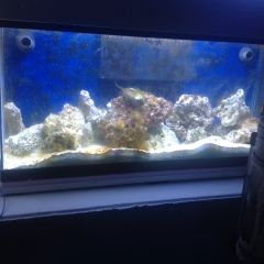 30 gallon 06 June 2015