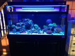 75g Reef