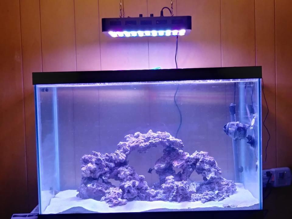 salt water aquarium with lights.jpg