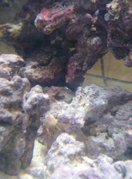shrimp molt.jpg